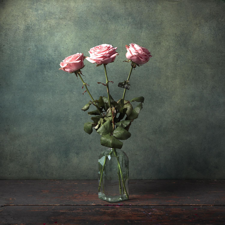 Fine art drie roze rozen